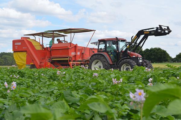 Maschinelle Unterstützung von Anbau und Ernte der Kartoffeln